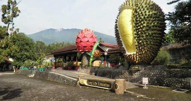 3 Tempat Wisata Alam Hits di Puncak Bogor