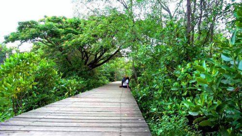 Menikmati Eksotisme Wisata Hutan Mangrove Wonorejo Surabaya