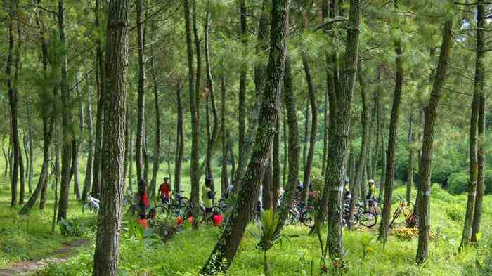Hutan Pinus Bedengan Ledok Ombo