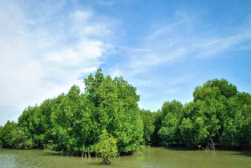 Muara Gembong mangrove