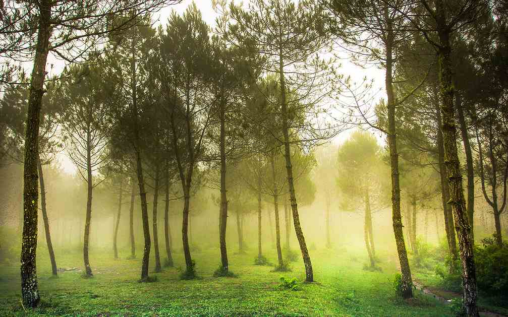 Taman Hutan Jaya Giri