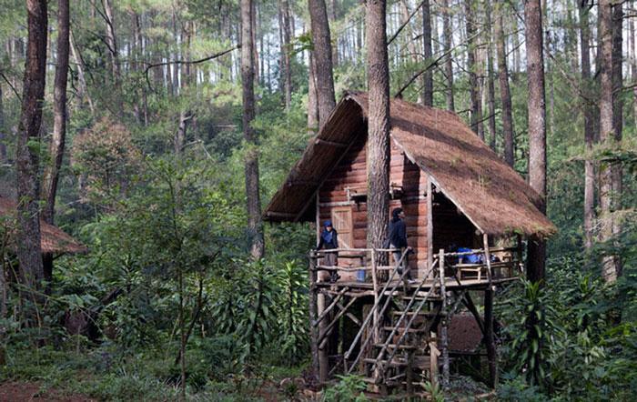 Wisata Rumah Pohon Taman Buru Gunung Masigit Kareumbi