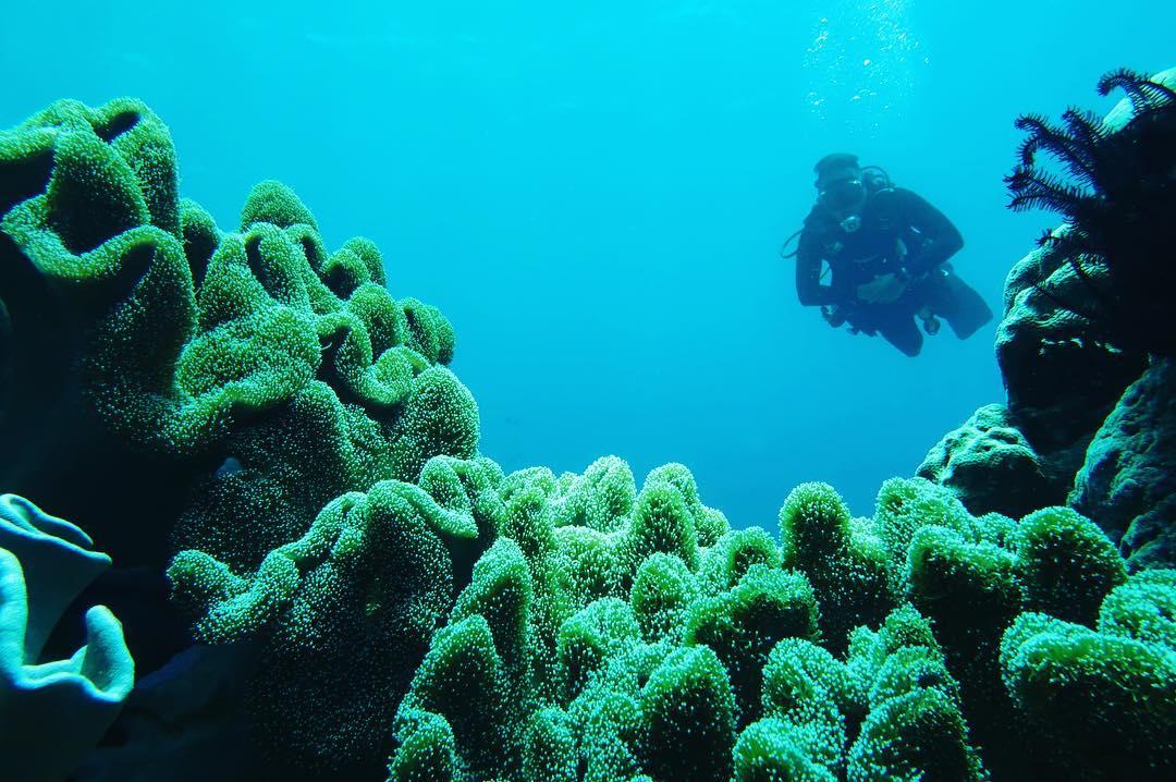 Menikmati Keindahan Alam Bawah Laut Wakatobi Wakatobi sebagai salah satu objek Wisata Bahari Dunia Terbaik dan salah satu Kabupaten di Provinsi Sulawesi Tenggara. Akomodasi di Wakatobi sudah semakin membaik dengan adanya Bandara Matahora Baru yang diluncurkan pada Bulan Desember 2008. Wakatobi sudah dikenal oleh wisatawan dunia sebagai spot snorkeling dan diving terbaik di Indonesia. Hal tersebut karena Wakatobi juga terletak secara geografis di pusat segitiga terumbu karang dunia. Oleh karenanya lautan di Wakatobi wisatawan bisa menemukan 942 spesies ikan dan 750 spesies terumbu karang dari total 850 koleksi dunia. Jumlah ini bahkan lebih banyak daripada jumlah spesies yang ada di Laut Karibia yang hanya memiliki 50 spesies, dan Laut Merah di Mesir yang hanya memiliki 300 spesies. Selain keindahan bawah laut, Wakatobi juga memiliki keindahan dan kekayaan lainnya seperti pantai berpasir putih, air laut jernih, matahari terbenam di setiap tepi pulau, reruntuhan sejarah seperti benteng kuno dan meriam yang tersebar di empat pulau utama, desa tua dengan pilar rumahnya. , melambai tradisional, pandai besi, suku Bajo dan berbagai tarian tertentu. Warisan alam dan budaya ini menjadikan Wakatobi sebagai obyek wisata bahari yang terkenal di dunia. Wakatobi akan menjadi pilihan terbaik bagi liburan anda, terutama bagi mereka yang ingin relaks sejenak dari kepenatan rutinitas sehari-hari. Wakatobi dikenal sebagai Pulau Tukang Besi di peta dan merupakan singkatan dari empat nama pulau utama yaitu Wangi-wangi, Kaledupa, Tomia dan Binongko, yang meliputi daerah sekitar 1.400.000 hektare dan terumbu karang memiliki luas 90.000 hektare dari total luas areal. Pulau ini juga terkenal sebagai penghalang terbesar kedua setelah Great Barrier Reef di Australia terdiri dari 39 pulau dan 7 di antaranya dihuni dengan jumlah penduduk sekitar 100,580, sedangkan beberapa pulau lainnya tetap tak berpenghuni. Wakatobi terdiri dari masyarakat multi etnis dan Suku Bajo atau Suku Bajo yang tinggal